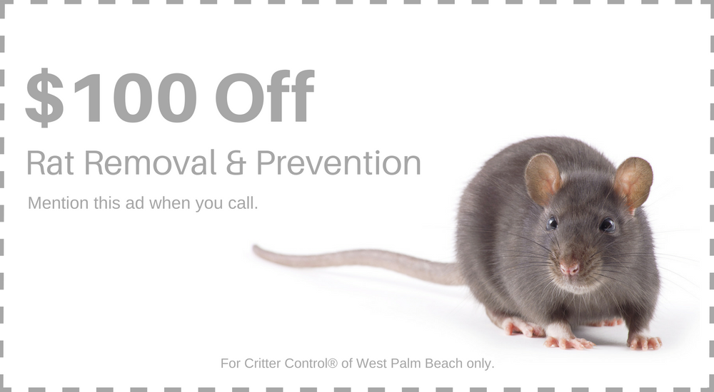 Save $100 on Rat Removal & Prevention